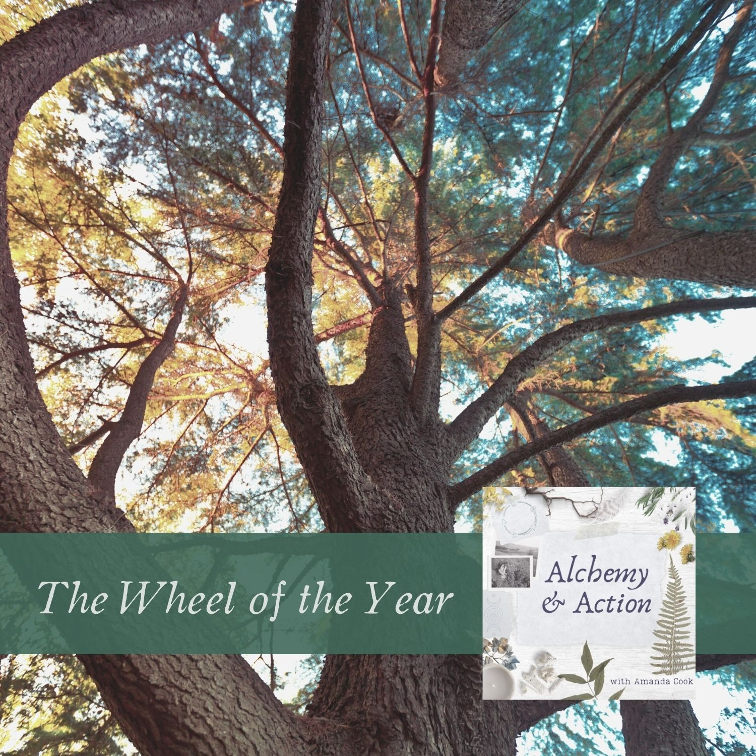 The Wheel of the Year {250}